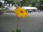 梅子に献花